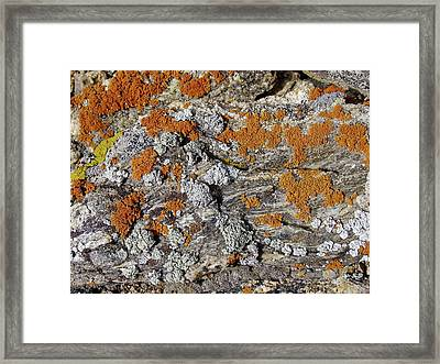 Colorado Rock Life Framed Print