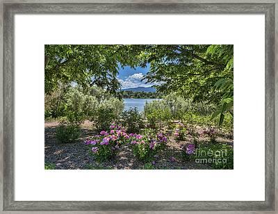 Colorado Rose Garden Framed Print by Keith Ducker