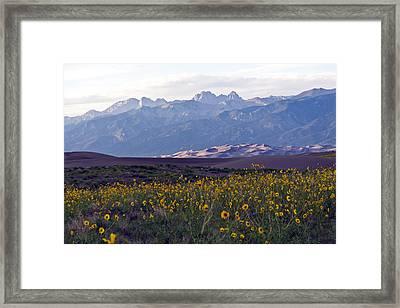 Colorado Style Landscape Sunflowers On The Sangre De Cristos Framed Print by Scotts Scapes