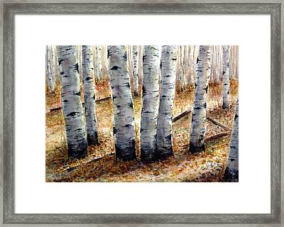 Colorado Trail Framed Print