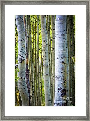 Colorado Trunks Framed Print
