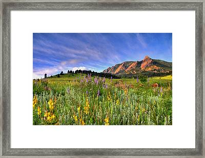 Colorado Wildflowers Framed Print by Scott Mahon