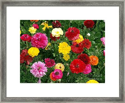 Colorboom 2 Framed Print by Arik Baltinester