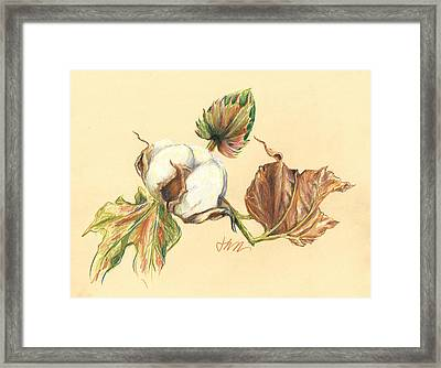 Colored Pencil Cotton Plant Framed Print