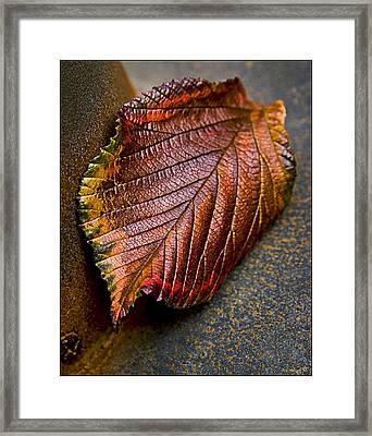 Colorfall Framed Print by Daniel G Walczyk