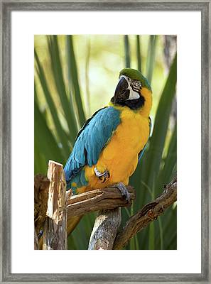 Colorful And Smart Framed Print