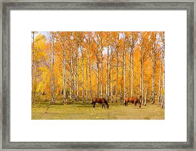 Colorful Autumn High Country Landscape Framed Print