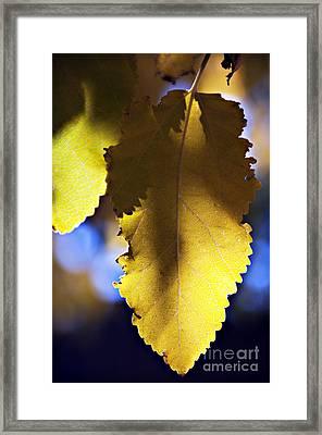 Colorful Autumn Leaf Framed Print