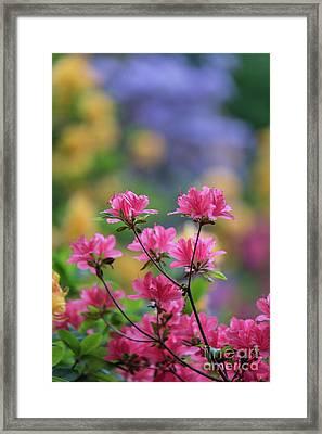 Colorful Azaleas Montage Framed Print