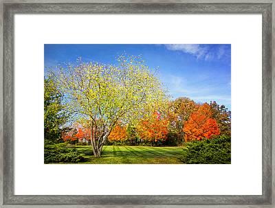 Colorful Backyard Scene Framed Print