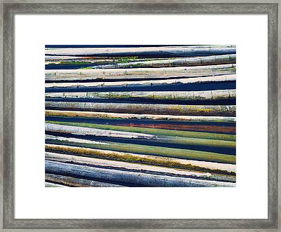 Colorful Bamboo Framed Print by Wim Lanclus