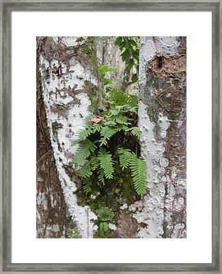 Colorful Bark And Fern Framed Print by Warren Thompson