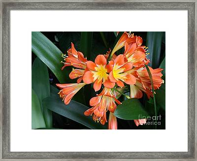 Colorful Beauties Framed Print by Donna Parlow