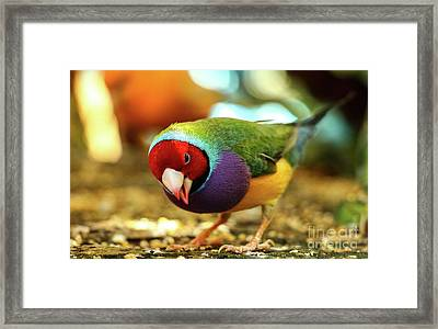 Colorful Bird Framed Print