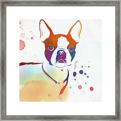 Colorful Boston Terrier Framed Print