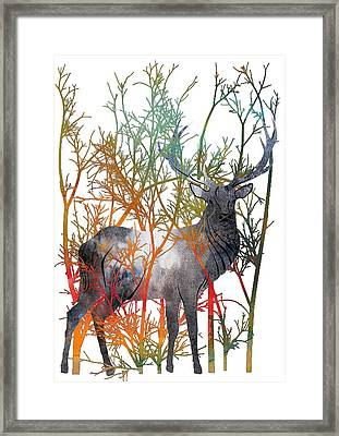 Colorful Buck 2 Framed Print by Diana Van