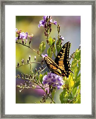 Colorful Butterfly Framed Print by Carol Groenen