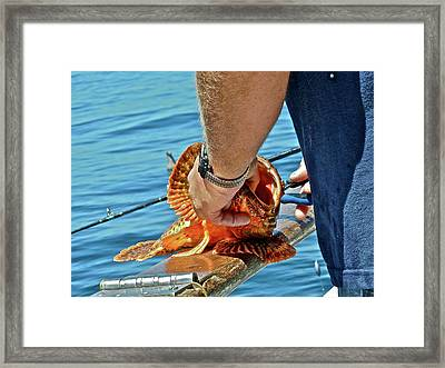 Colorful Catch Framed Print