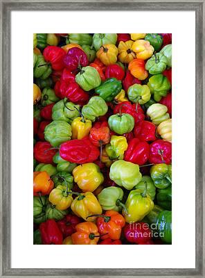 Colorful Chili Pepper Framed Print