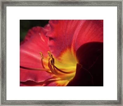 Framed Print featuring the photograph Colorful Cobras by David Coblitz