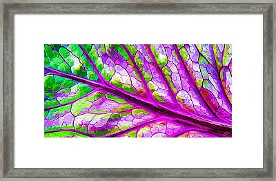 Colorful Coleus Abstract 2 Framed Print by ABeautifulSky Photography