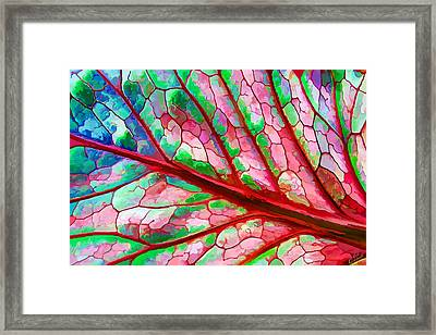 Colorful Coleus Abstract 5 Framed Print by ABeautifulSky Photography