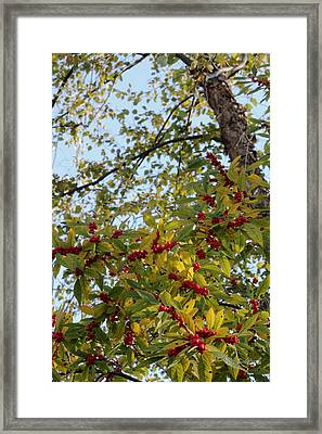 Framed Print featuring the photograph Colorful Contrasts by Deborah  Crew-Johnson