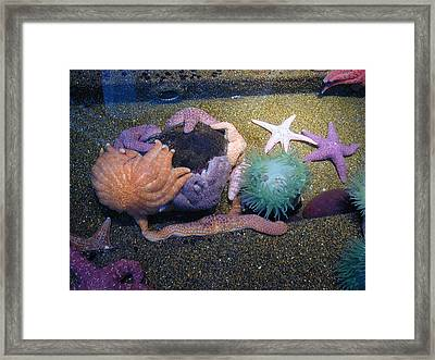 Colorful Coral Framed Print by Laurie With
