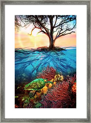 Colorful Coral Seas Framed Print