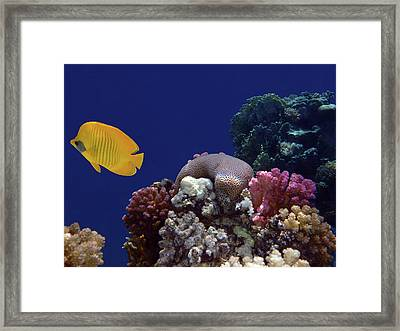 Colorful Coralreef Framed Print