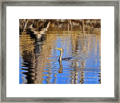 Framed Print featuring the photograph Colorful Cormorant by Al Powell Photography USA