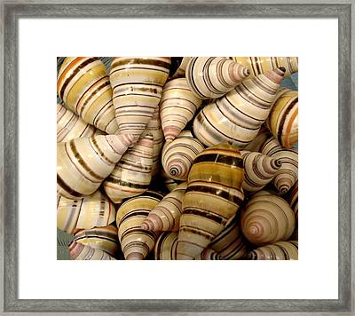 Framed Print featuring the photograph Colorful Cream And Tan Shells by Rosalie Scanlon