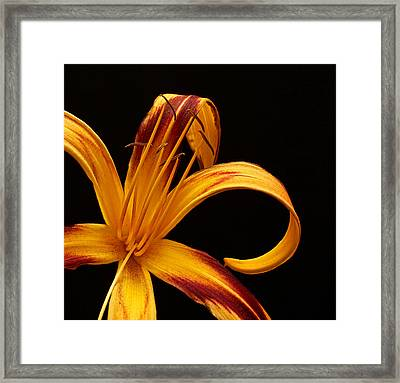 Framed Print featuring the photograph Colorful Curls by Judy Vincent