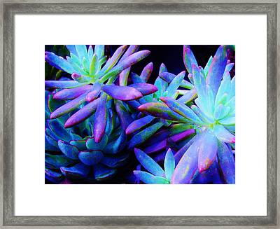 Colorful Dancing Succulents Framed Print