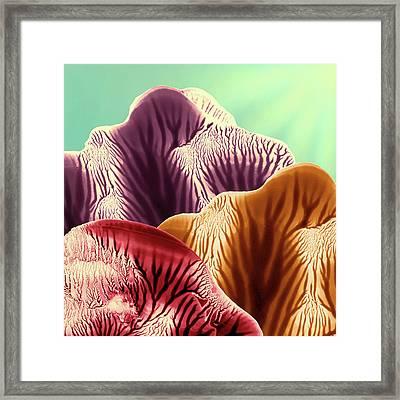 Colorful Desert Mountains At Sunrise Framed Print