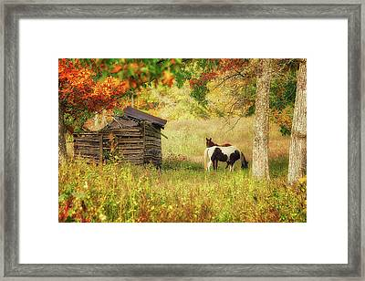 Colorful Display Framed Print