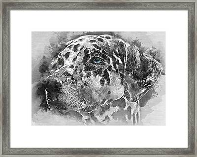 Colorful Dog Portrait 1 - By Diana Van Framed Print by Diana Van