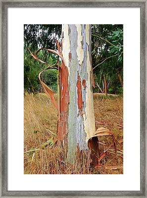 Colorful Eucalyptus Tree Bark 3 Framed Print