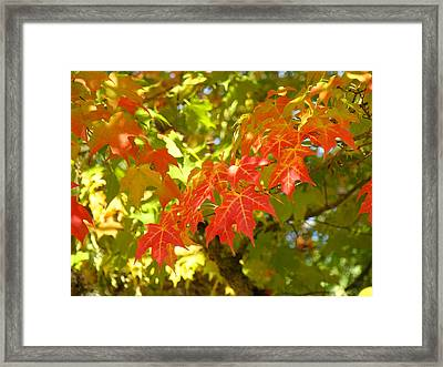 Colorful Fall Leaves Red Nature Landscape Baslee Troutman Framed Print by Baslee Troutman