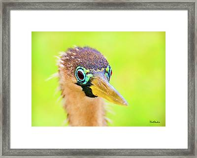 Colorful Female Anhinga Framed Print