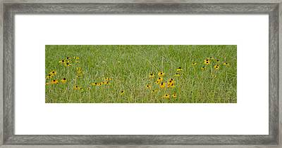 Framed Print featuring the photograph Colorful Field by Wanda Krack