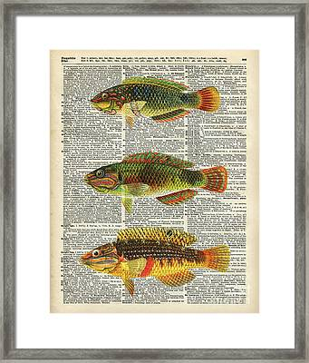 Colorful Fishes Framed Print