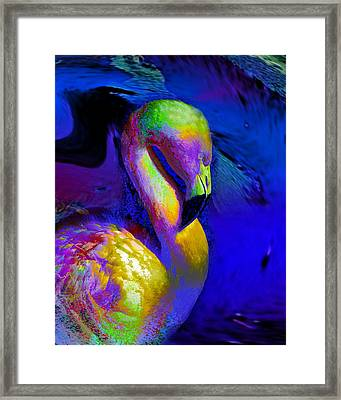 Colorful Flamingo   Framed Print by Doris Wood