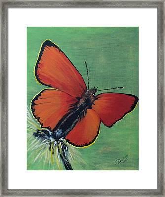 Colorful Flight Framed Print