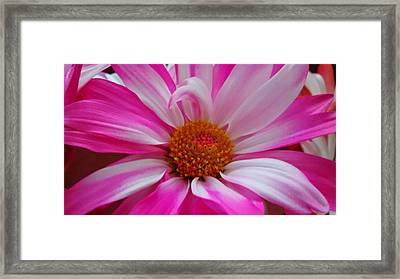 Colorful Flower Framed Print by Dustin Soph