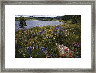 Dumont Lake Colorful Flowers Framed Print by Dave Dilli