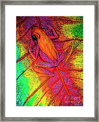 Colorful Frog On Leaf Framed Print by Nick Gustafson