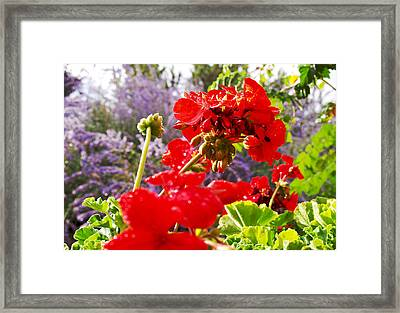 Colorful Garden II Framed Print by James Granberry