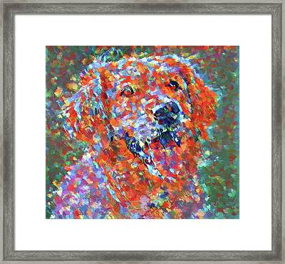 Colorful Golden Retriever Framed Print by Dan Sproul