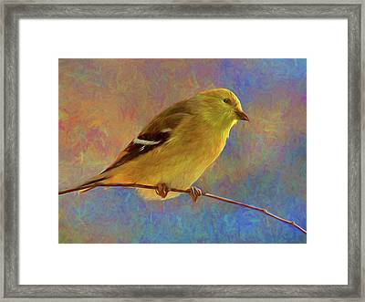 Colorful Goldfinch - Digital Painting Framed Print by Mitch Spence